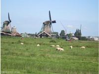 פנויים פנויות בהולנד